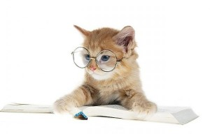 cat-reading-a-book-with-glasses-600x384